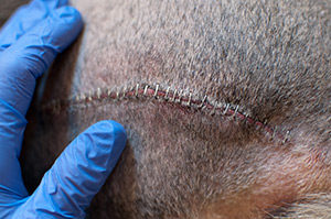 Advancing the Science of Wound Care - Vetericyn Plus® Veterinary Formula